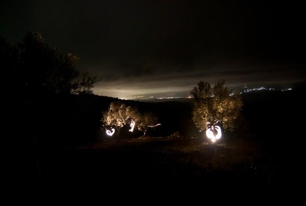 01 Olive Garden Night Shot 2